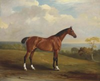 Clinker, the bay hunter of H.H. Holdich-Hungerford of Dingley Park, Northamptonshire